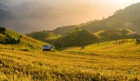 在大阳台的越南美好的风景米领域在moun 库存图片