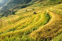 在大阳台的越南美好的风景米领域 免版税库存照片