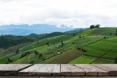 在大阳台的绿色米领域在山谷 美好的本质 图库摄影