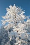 在大雪下的树 免版税库存照片