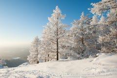 在大雪下的森林 库存图片