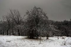在大雪和冰下的树 33c 1月横向俄国温度ural冬天 免版税图库摄影