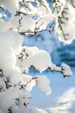 在大雪报道的树枝在一个晴朗的冬天早晨 库存图片