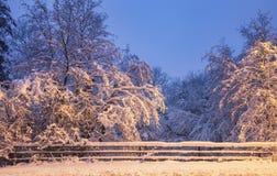 在大雪报道的风景冷漠的树枝 免版税图库摄影