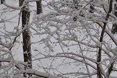 在大雪的树枝 免版税库存照片