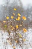 在大雪的黄色秋叶 图库摄影
