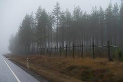 在大雾期间的秋天森林 库存照片