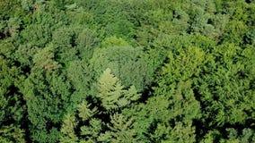 在大风天,鸟瞰图期间,慢慢地飞行在树在具球果森林里加冠 影视素材