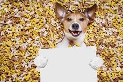 在大食物土墩的饥饿的狗 库存图片