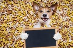 在大食物土墩的饥饿的狗 免版税库存照片