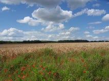 在大麦的边缘的鸦片调遣 库存照片