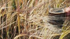 在大麦领域的农夫举行黑啤酒 股票视频