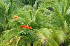 在大麻棕榈叶的红色花 库存照片
