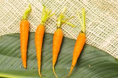 在大绿色安置的四棵新鲜的被排列的红萝卜 图库摄影