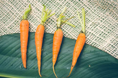 在大绿色安置的四棵新鲜的被排列的红萝卜 库存图片