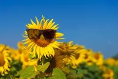 在天中午的愉快的向日葵有蓝天摘要背景 免版税库存照片
