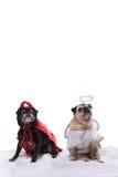 在天使和恶魔服装的哈巴狗狗 库存照片