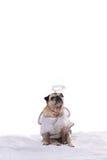 在天使服装的哈巴狗狗 库存图片