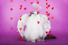 在天使礼服的猫  库存图片