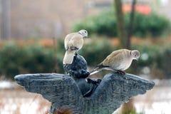 在天使雕象的两只鸽子 库存照片