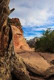 在天使` s着陆附近,锡安国家公园,犹他上面的死的树干监视  免版税库存照片