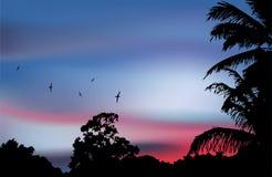 在天堂日落的棕榈树剪影。传染媒介 免版税库存照片