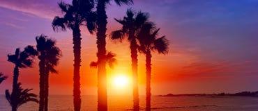 在天堂日落的棕榈树剪影在海滩 库存照片