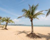 在天堂日落的棕榈树剪影 免版税图库摄影