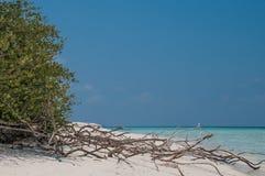 在白色沙子海滩和棕榈树的沉材 库存照片