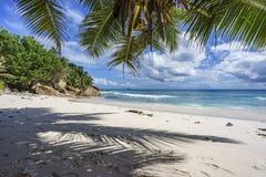 在天堂的棕榈树靠岸在anse patates, la digue, seychell 免版税库存图片