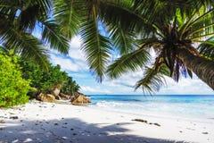 在天堂的棕榈树靠岸在anse patates, la digue, seychell 库存照片