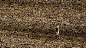 在天旱中的鸟 免版税图库摄影