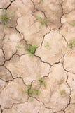 在天旱以后的复兴 与许多镇压的旱田 免版税库存图片
