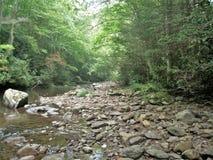 在天旱期间的弗吉尼亚爬行物足迹 库存照片