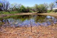 在天旱期间的西部得克萨斯储蓄池塘 免版税库存照片