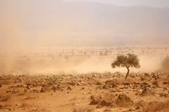 在天旱期间的多灰尘的平原 免版税图库摄影