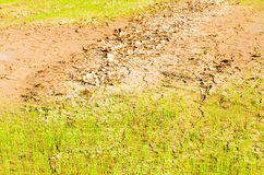 在天旱领域的米 库存图片