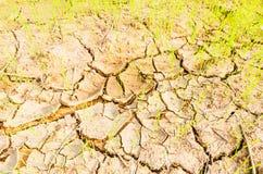 在天旱领域的米 免版税库存照片