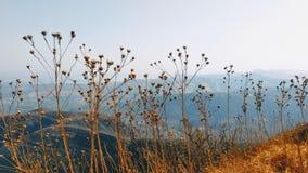 在天时间的山景 免版税库存图片