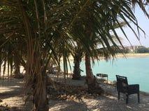 在天时间的棕榈 免版税图库摄影