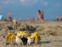 在天期间,在拥挤海滩的鬼魂螃蟹 库存照片