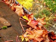 在天沟的叶子 库存照片