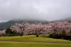 在天狮瓷公园,英雄传奇肯,日本附近的山景 免版税库存照片