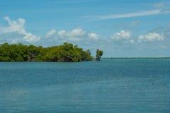 在天空和海之间的美洲红树西安的钾生物圈的' 免版税库存照片