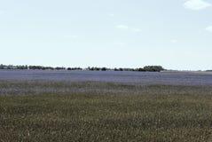在天空和矢车菊领域的土块 库存照片