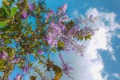 在天空和阳光下,树可能仍然种植在绽放的开花的紫色花 免版税库存图片