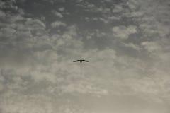 在天空的一只鸟 免版税库存照片