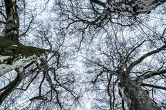 在天空的一棵不生叶的树 免版税库存照片