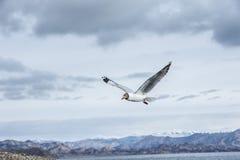 在天空的一次鸥飞行 免版税图库摄影
