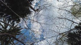 在天空的云彩在森林时间间隔 股票录像